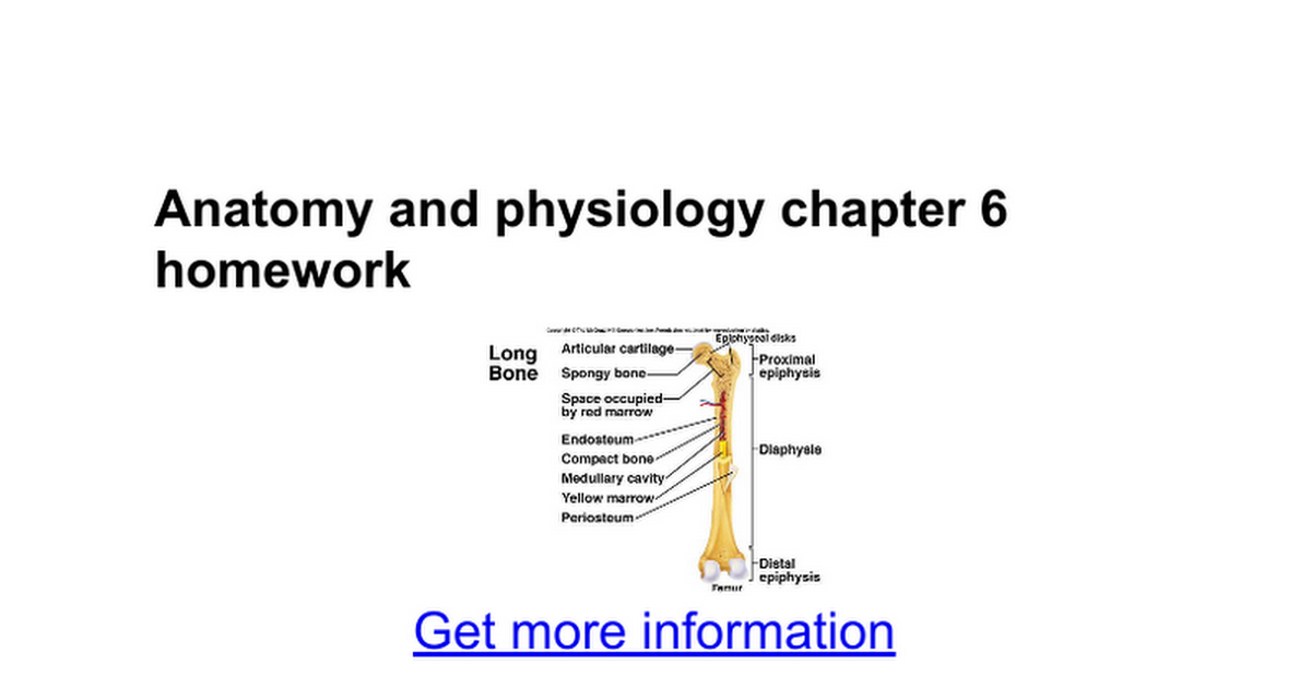 Anatomy and physiology chapter 6 homework - Google Docs