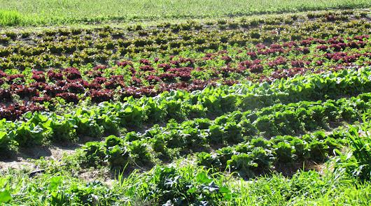 El 80% de las explotaciones agrarias ecológicas  son de producción vegetal
