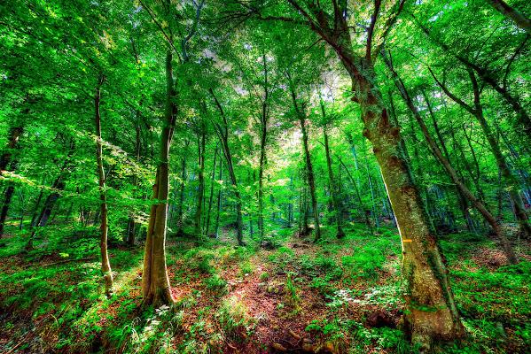 Manteniamolo cosi il bosco.... di Ocram
