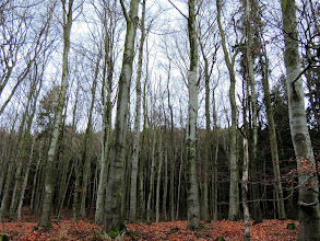 Photo: Spaziergang  #Trees  #SimpleNature  #Harz