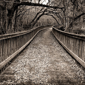 Into The Forest by Brent Sharp - Black & White Landscapes ( leading lines, black and white, trees, bridge, landscape, branches,  )