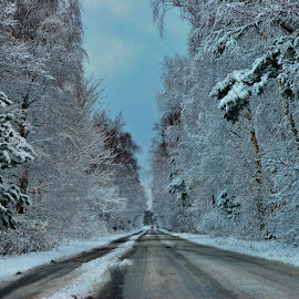 Winter Road by Tomasz Budziak - Landscapes Forests ( winter, transportation, roads,  )