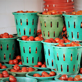 Tomatoes Everywhere by Roxanne Dean - Food & Drink Fruits & Vegetables ( stacked, juicy, rows, fruit baskets, red veggies,  )