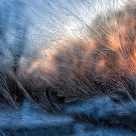 Frosty window sunrise  by Susan Campbell - Abstract Macro