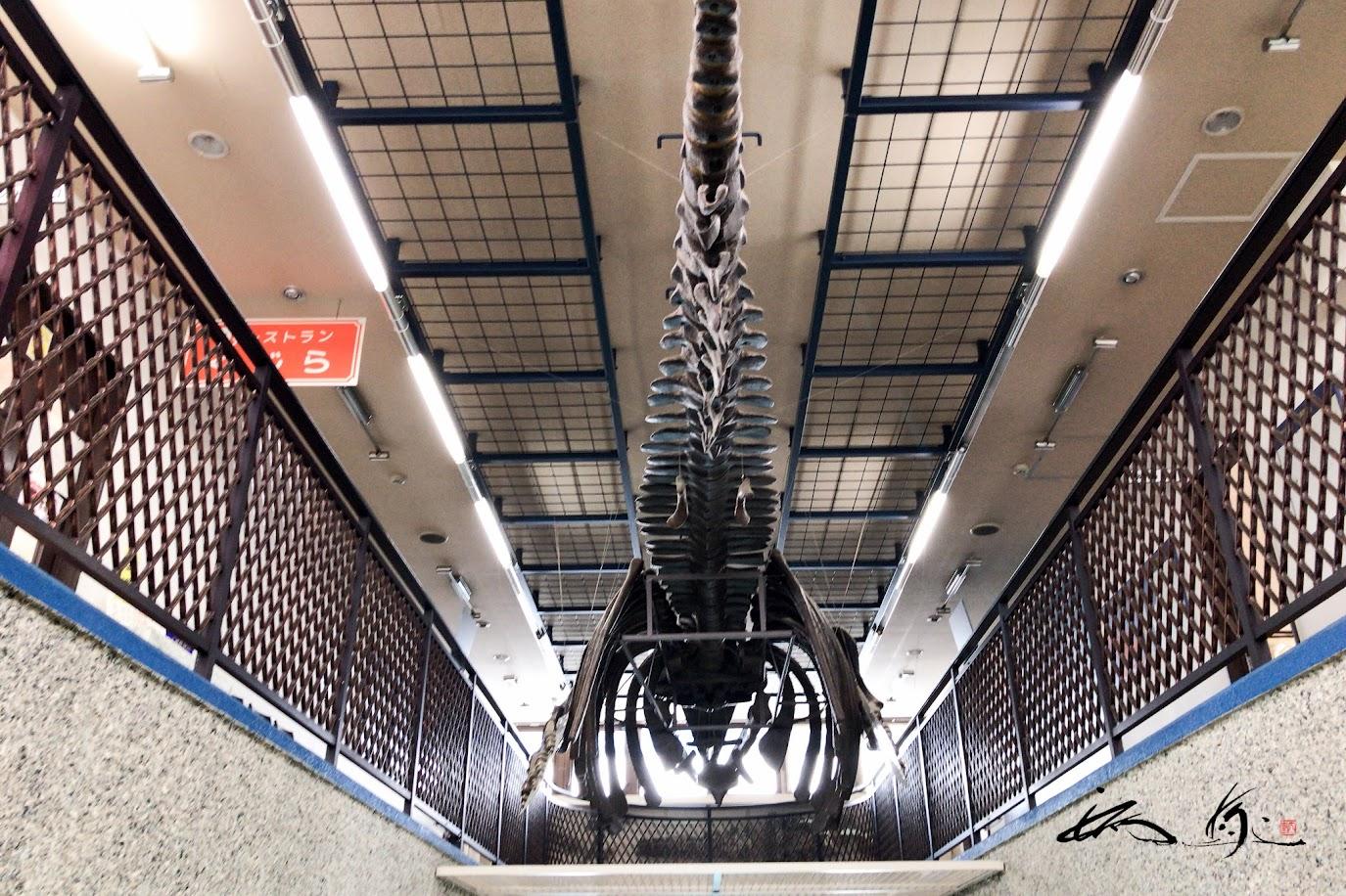 天井に吊り下げられた巨大クジラ