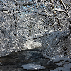 Beauty of Winter by Chris Bizic-Beihl - Landscapes Weather ( winter, creek, snow, blue skies, trees,  )