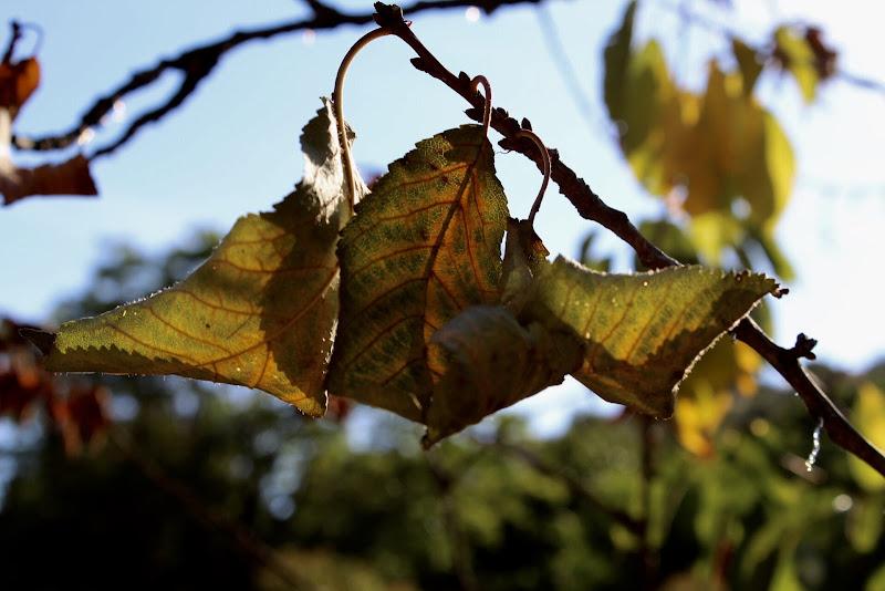 3 foglie... di MarcoPhotos