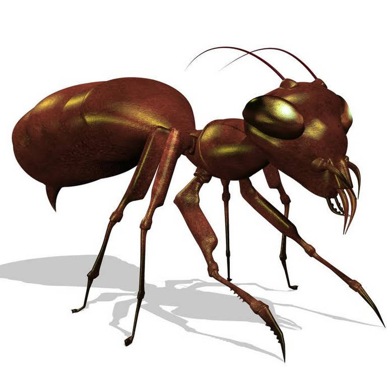 Bed Bug Busters Fishers Pest Control Service In Fishers
