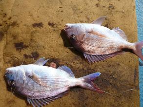 Photo: おおー! ダブルで真鯛!