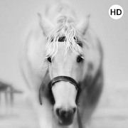 Horse Wallpaper 3D Apps On Google Play