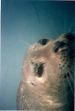 Photo: Harbor Seals in La Jolla Cove, CA