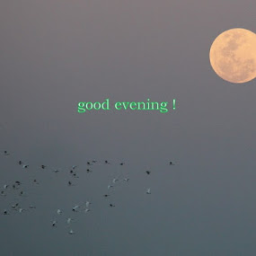 moon by John Williams - Typography Captioned Photos