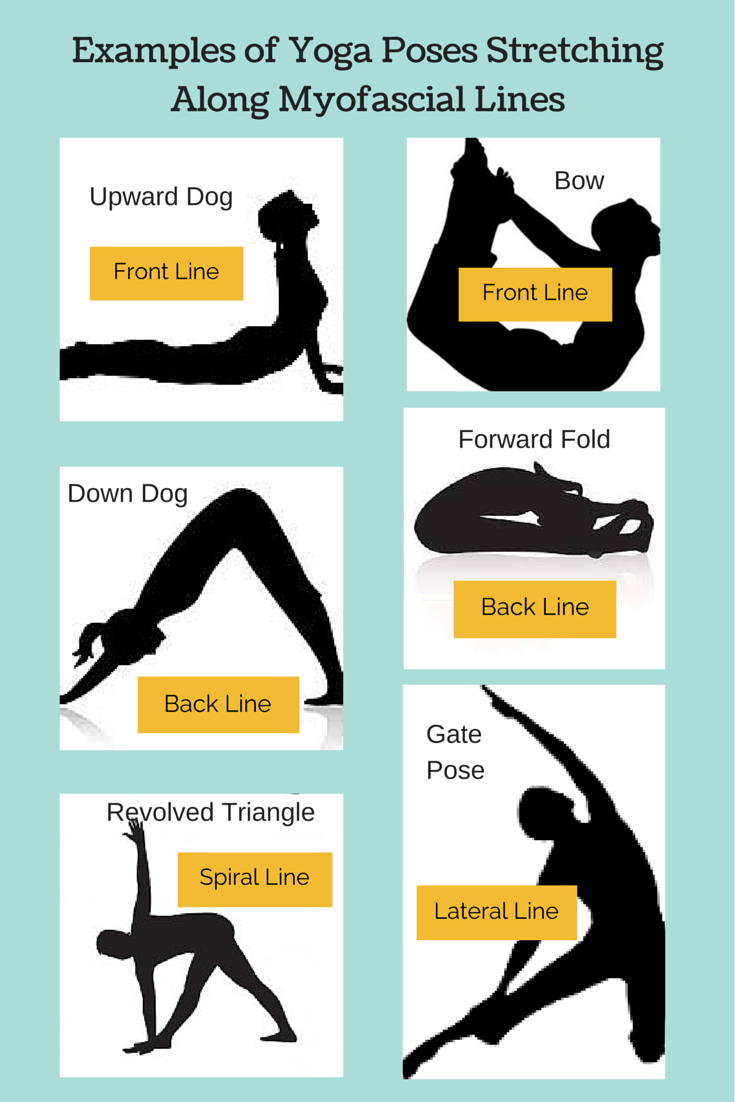 yoga poses for myofascial lines.png