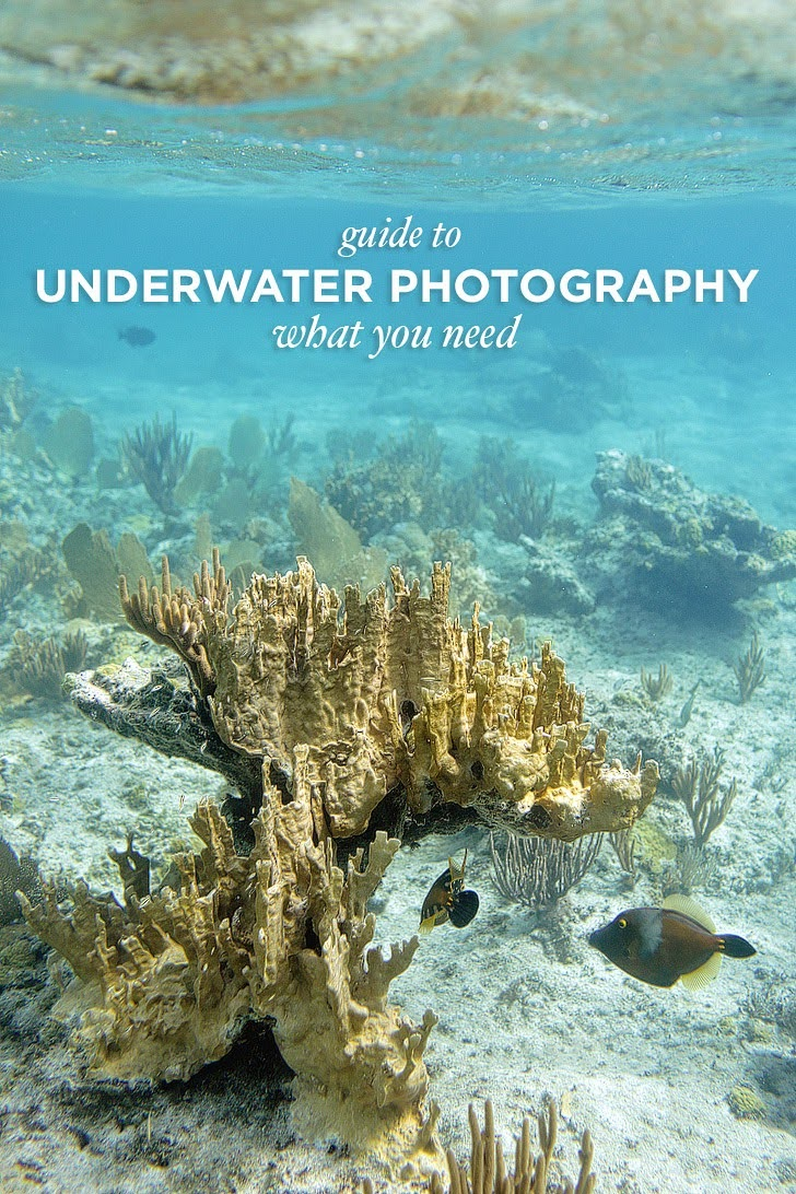 Photo Gear Guide to Underwater Photography.