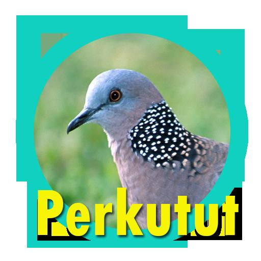 Download Suara Burung Perkutut Juara Free For Android Suara Burung Perkutut Juara Apk Download Steprimo Com