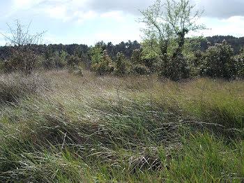 terrain à Villeneuve-Minervois (11)