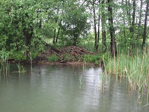 Photo: Żeremie bobrowe.