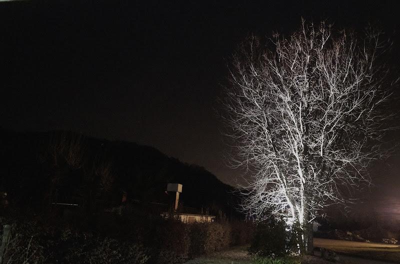 light tree di clarin65