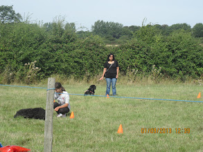 Photo: Human Retrieve game - Tilly Labradoodle with Tamsin, Dicer Lab with Rekha