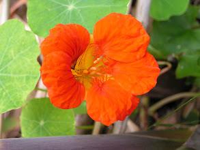Photo: Незнакомый цветок