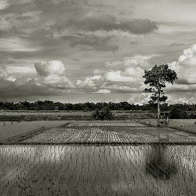 Moving On by Purnawan  Hadi - Landscapes Cloud Formations ( duo tone, bali, rice field, tree, black and white, indonesia, landscape, clauds, b and w, b&w, monotone, mono-tone,  )