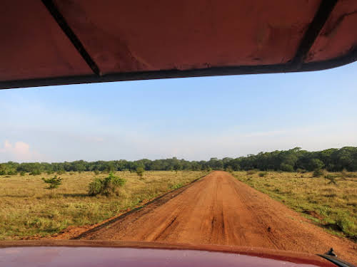 Sri. Lanka Wilpattu National Park . Red dirt road.