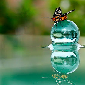 Butterflection by Teguh Santosa - Animals Insects & Spiders