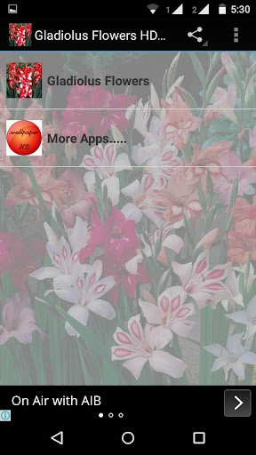Gladiolus Flower HD Wallpaper