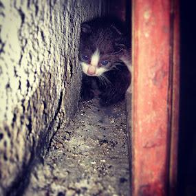 Kitten Behind Door by Israel  Padolina - Instagram & Mobile iPhone ( kitten, hide, door )