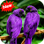Parrot file APK for Gaming PC/PS3/PS4 Smart TV