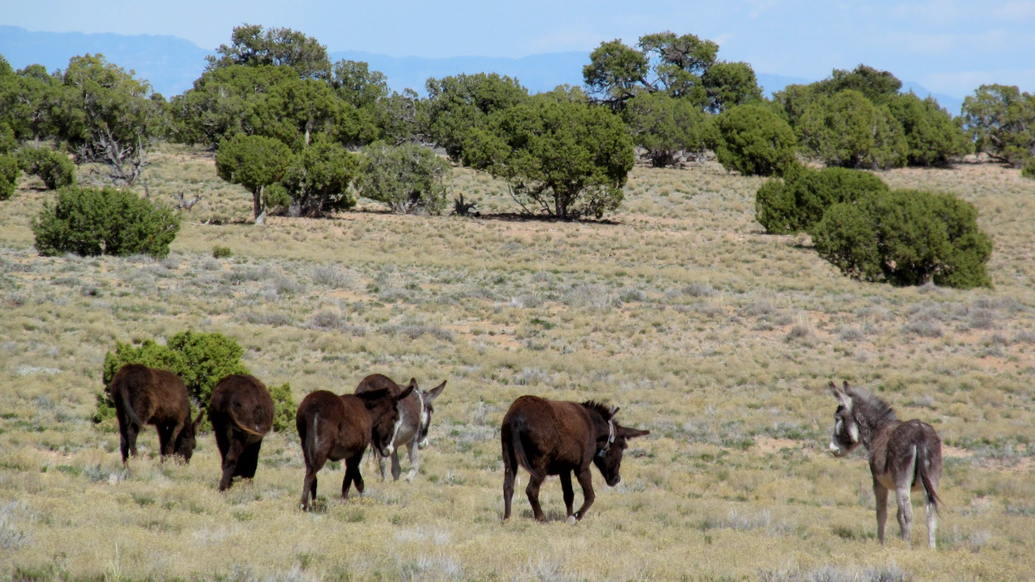 Photo: Wild burros at Rattlesnake Flat