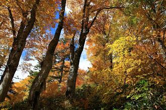 Photo: ブナの森