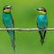 zibido oasi gruccioni maggio 2015 (1 di 1)-3.jpg
