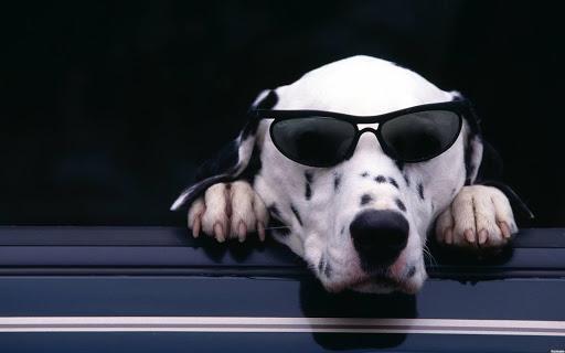Cool Dog Live Wallpaper
