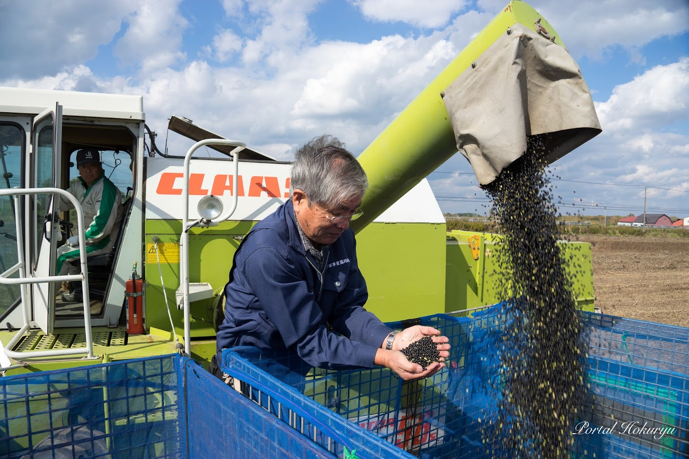 黒千石大豆収穫 2017(石狩市)