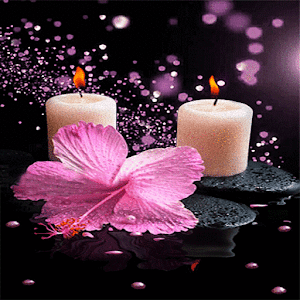 Pink Flower Candle LWP download