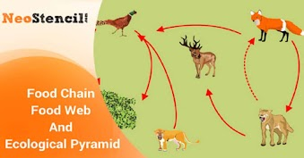 Food Chain - Food Web And Ecological Pyramid