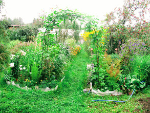 Photo: Зелёная дорожка