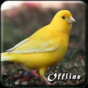 Kicau Burung Kenari MP3 Offline