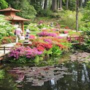 Water Garden Wallpaper