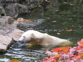 Photo: Das Futter ist im Wasser gelandet ;-)