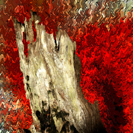 Burnt Tree by Edward Gold - Digital Art Things ( digital photography, red background, tree stump, burnt tree stump, tan tree stump, black, artistic object, abstract fire background, digital art,  )