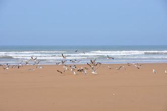 Photo: Sur la plage de Sidi M'Bark