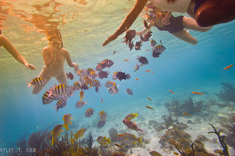 Photo: School of joy Cayman Islands, Caribbean From the blog http://www.kylefoto.com  Being surrounded by a school of fish feels like nature is personifying your wonder with the colourful shapes and graceful movements of each fish as they move around you in a synchronized spectacle.  Photographic Details: A shot like this could very well be possible with one of those underwater disposable cameras. The major difference here is that I used a graduated yellow filter on the top left of the image to give this photo a more etherial feel. Next time you go on vacation, bring an underwater housing!   +ewa-marine Germany housing, Shutter Priority mode Canon 20D 1/250s f/5.0 ISO100 12mm (35mm eq:19.2mm)