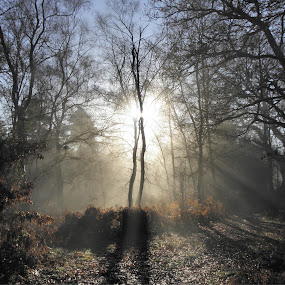 Sunrays by Cliff Oakley - Landscapes Forests ( england, nature, sunrays, forest, woodland, sun )