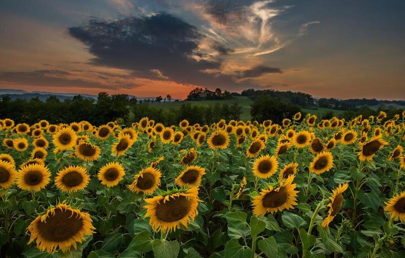 al tramonto volti all'alba di Marco Lorini