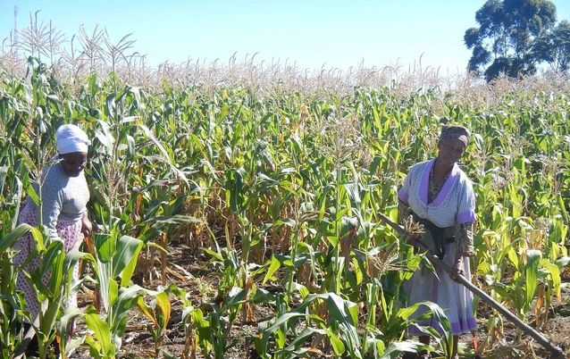 Land reform through restitution and redistribution policies has made some progress, with over 9% of commercial farmland (over 8-million hectares) redistributed through government schemes, say the writers. Picture: DAILY DISPATCH