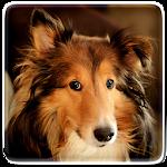 Dog Live Wallpaper