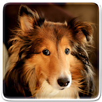 Dog Live Wallpaper Icon