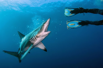 Photo: Blacktip Shark, South Africa, Protea Banks